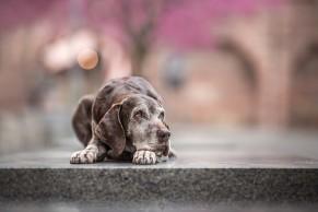 13 - City Dog