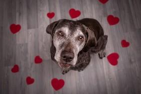 6 - Be my valentine